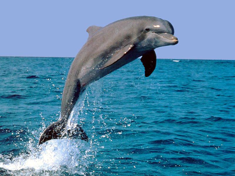 海豚怎样画才能很可爱